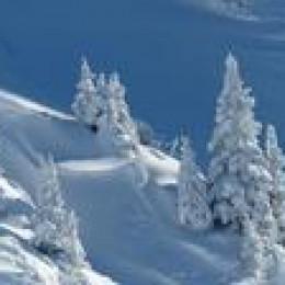 Alle Tiroler jetzt unter der Tirol-Domain vereint