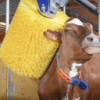 Glückliche Kühe in harmonisierter IT-Landschaft