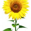 IPM Essen 2014 – Software für den Blumenhandel und Blumenimport